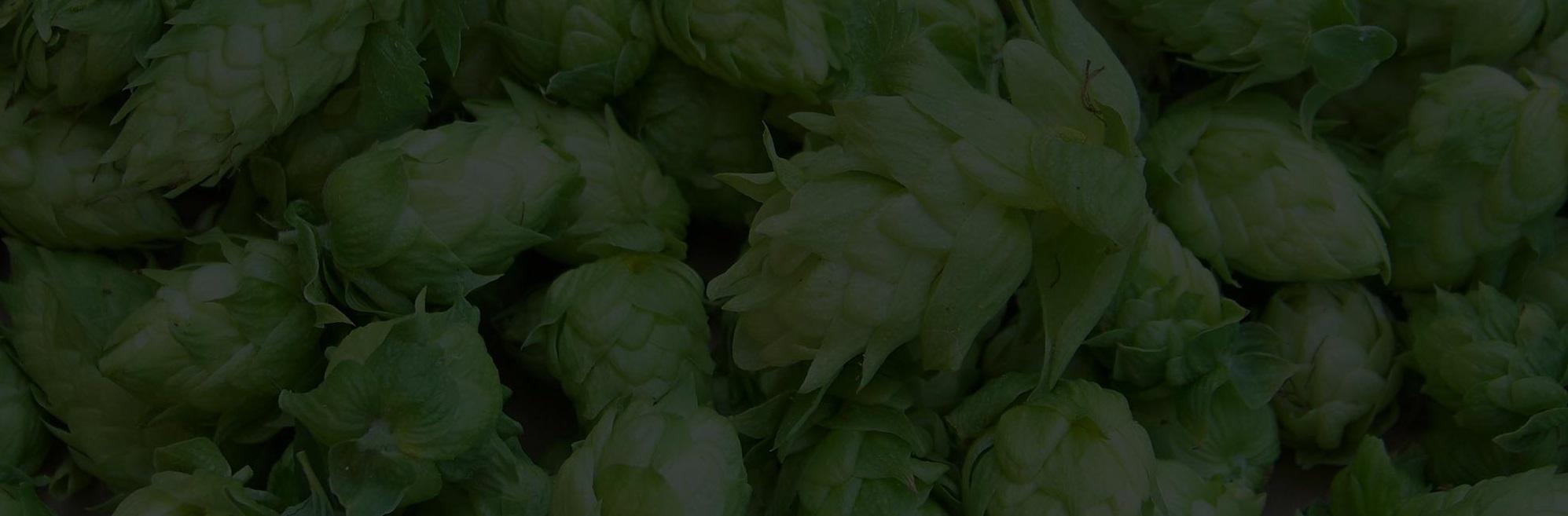 Beech-Tree-Blackheath-background-hops